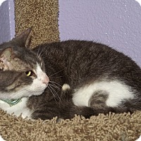 Adopt A Pet :: Tuffy - Englewood, FL
