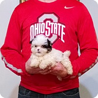 Adopt A Pet :: Pierre - South Euclid, OH