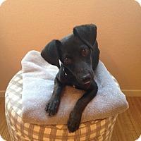 Adopt A Pet :: Jackson - Las Vegas, NV