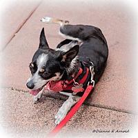Adopt A Pet :: Violet - San Marcos, CA