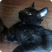 Adopt A Pet :: Eowin - North Highlands, CA