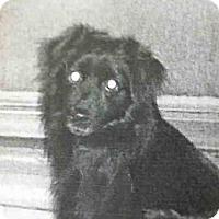 Adopt A Pet :: NAO - San Martin, CA