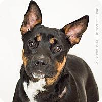 Adopt A Pet :: Liebchen - Naperville, IL