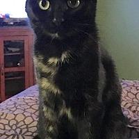 Adopt A Pet :: Agatha - McKinney, TX