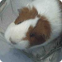 Adopt A Pet :: *Urgent* Allie - Fullerton, CA