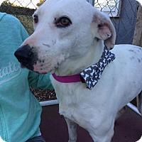 Adopt A Pet :: Murray - Unionville, PA