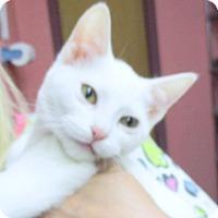 Adopt A Pet :: Winter - Reeds Spring, MO
