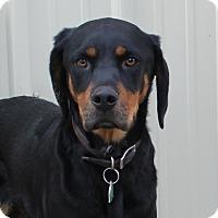 Adopt A Pet :: Ruby - Priest River, ID