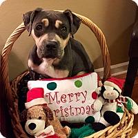 Adopt A Pet :: Tilly - Memphis, TN