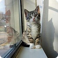 Adopt A Pet :: Poppy - Houston, TX