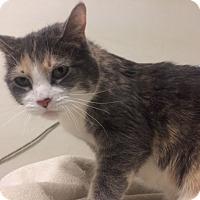 Adopt A Pet :: Gizmo - Chicago, IL