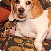 Adopt A Pet :: Molly Rose - Phoenix, AZ