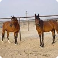 Adopt A Pet :: Wings of Fire & Dragonfly - Lucerne Valley, CA