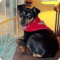 Adopt A Pet :: Xena - Nashville, TN