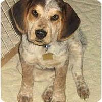 Adopt A Pet :: Claussen - Novi, MI