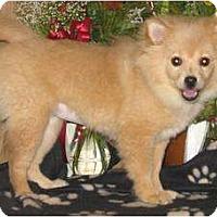 Adopt A Pet :: CUTIE - Parsons, TN