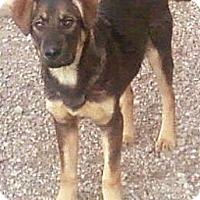 Adopt A Pet :: Mikka - Toledo, OH