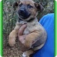 Adopt A Pet :: Posey (IN New England) - Brattleboro, VT