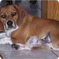 Adopt A Pet :: Trey - Prairieville, LA