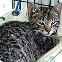 Adopt A Pet :: Monterey Jack - Lunenburg, MA
