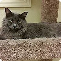 Adopt A Pet :: Tickles - Phoenix, AZ