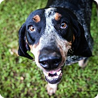Adopt A Pet :: Jethro - Franklin, VA