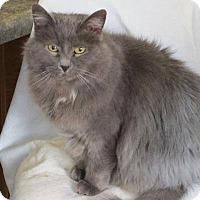 Adopt A Pet :: Shyloh - tama, IA