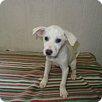 Adopt A Pet :: andy in CT - East Hartford, CT