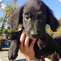 Adopt A Pet :: ROSEBUD- Little lady - Pompton Lakes, NJ