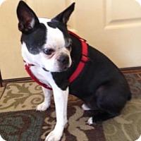 Adopt A Pet :: Dwight - Wichita, KS