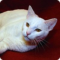 Adopt A Pet :: Puddin - Fairfax, VA