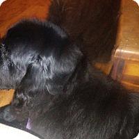Adopt A Pet :: Mo - Adoption pending - Lee's Summit, MO