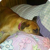 Adopt A Pet :: Mia - Tomah, WI