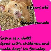 Adopt A Pet :: Sasha - Stephenville, TX