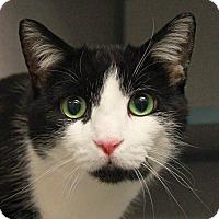 Adopt A Pet :: Romeo - New Rochelle Humane, NY