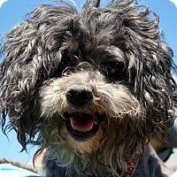 Adopt A Pet :: Bean - Elyria, OH