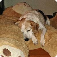 Adopt A Pet :: Alice's story - Houston, TX