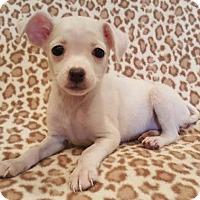 Adopt A Pet :: Bell - Modesto, CA