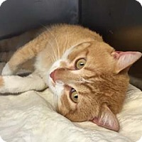 Adopt A Pet :: Phoenix - Merrifield, VA