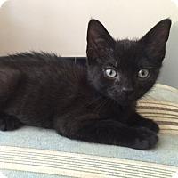 Adopt A Pet :: Athena - Great Mills, MD