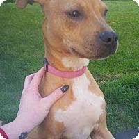 Adopt A Pet :: Halo - Dayton, OH