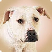 Adopt A Pet :: Claire - Prescott, AZ