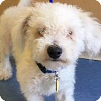 Adopt A Pet :: Finley D5650 - Fremont, CA