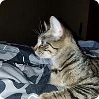 Adopt A Pet :: Jesamine - Wilmore, KY