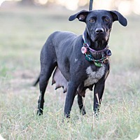 Adopt A Pet :: Beth $125 - Seneca, SC
