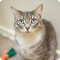 Domestic Shorthair Cat for adoption in North Hollywood, California - Mimi
