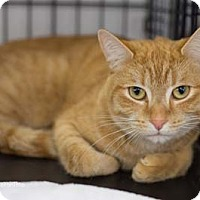 Adopt A Pet :: Geronimo - Merrifield, VA