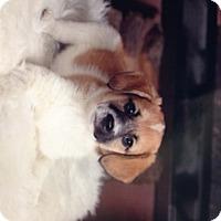 Adopt A Pet :: Betty Sue - Cincinnati, OH
