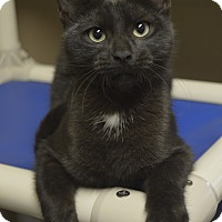 Adopt A Pet :: Topaz - Germantown, TN