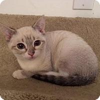 Adopt A Pet :: Polar - Long Beach, CA